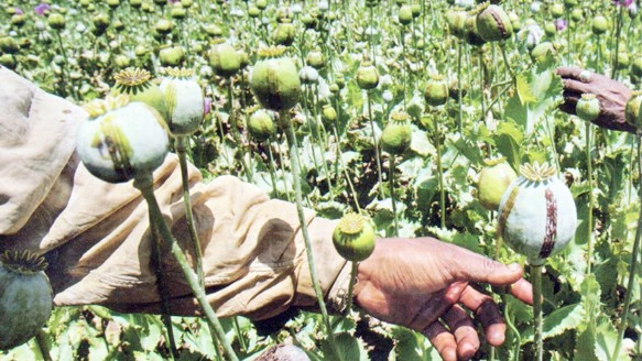 South East Asia's Opium Poppy Harvest Just Got a Shot in the Arm