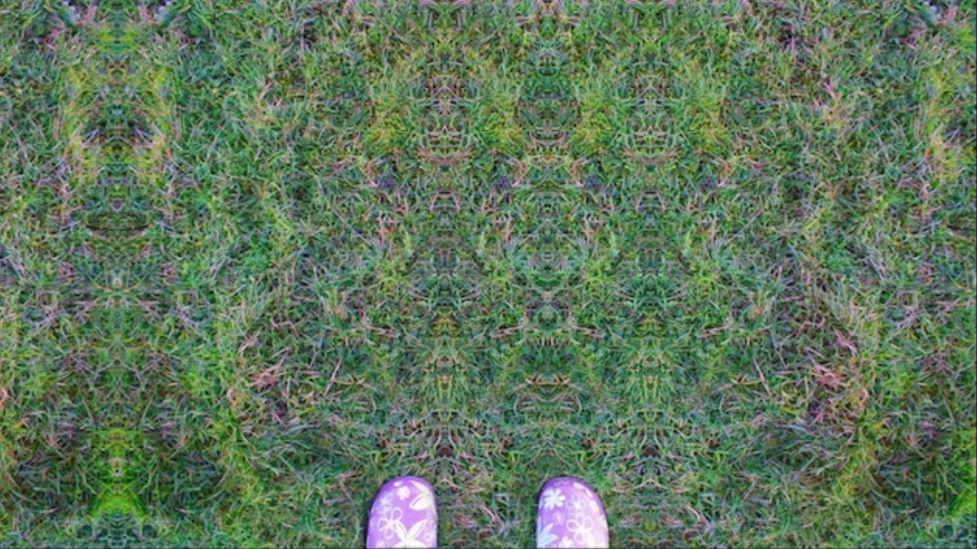 Why You See What You See When You're Tripping on