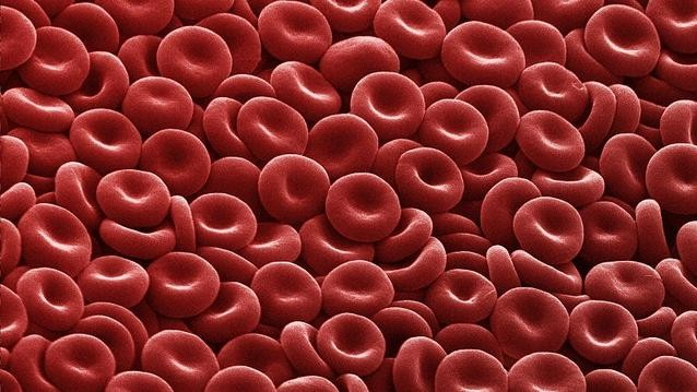 Scientists Have Manipulated Old Stem Cells to Produce Younger Blood