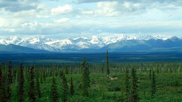 As Boreal Forests Move North, They're Likely to Shrink