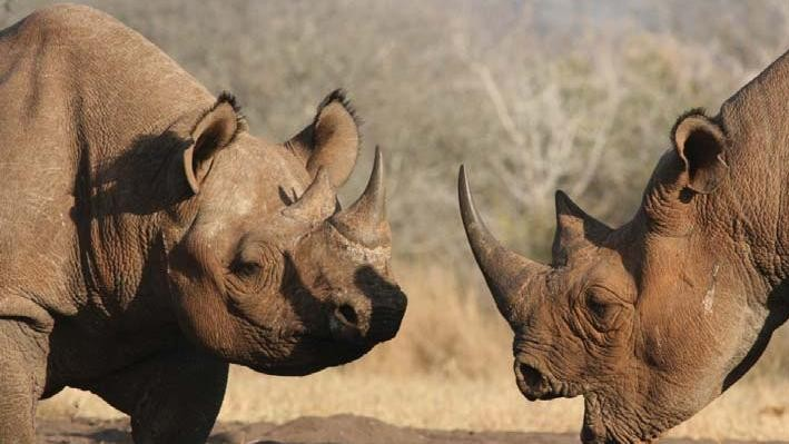 Vietnam and South Africa Have Pledged to Close a Huge Rhino Loophole