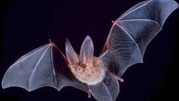 Will Blind People One Day Be Able to Echolocate Like Bats?