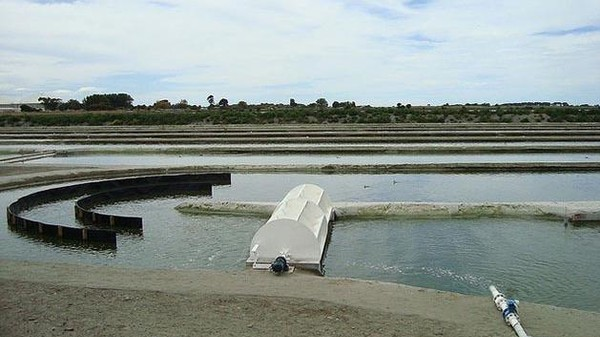 Algae Could Provide One-Twelfth of the US Fuel Supply Without Stressing Water Supplies