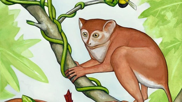 Meet the Oldest Primate on Record Yet