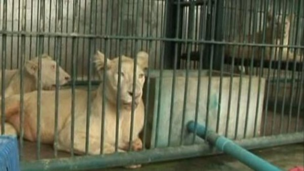 More Than 1,000 Wild Animals Were Seized from a Bangkok Farm