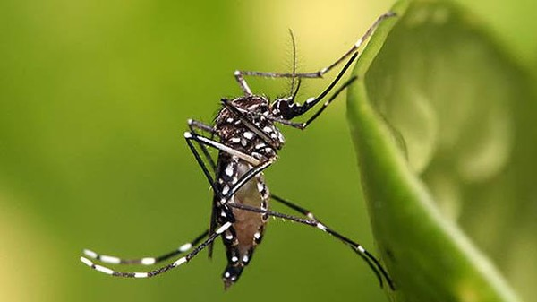 What the Dengue Fever Outbreak in Honduras Portends for the US
