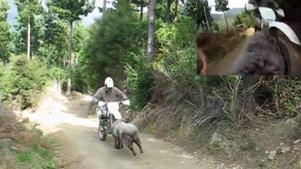 Watch This Guy Get Knocked Off His Motorcycle Through the Eyes of a Ram Cam