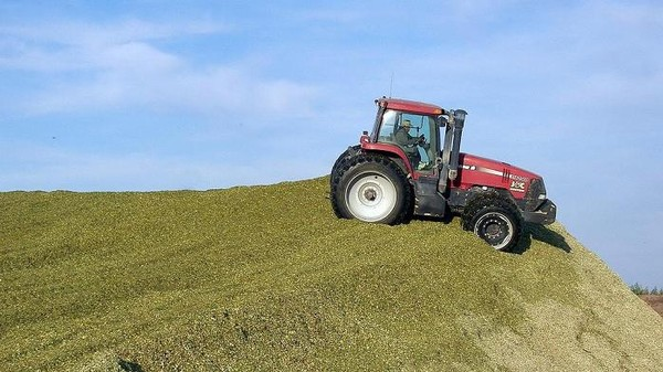 Europe Moves To Drastically Cut Crop-Based Biofuels