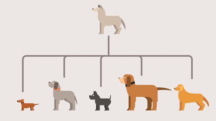 Enjoy This Simple and Uncondescending Animation Explaining Evolution
