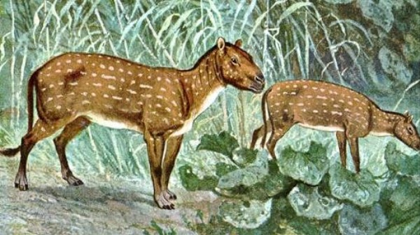 Global Warming Shrinks Mammals