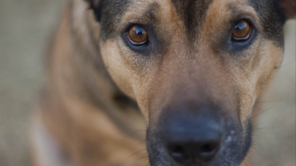 The Debate Over Dogs' Origins Just Got Even More Complicated