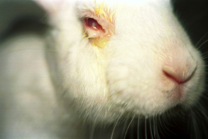 How Fake Skin Will End Animal Testing (as Soon as We Can Mass Produce It)