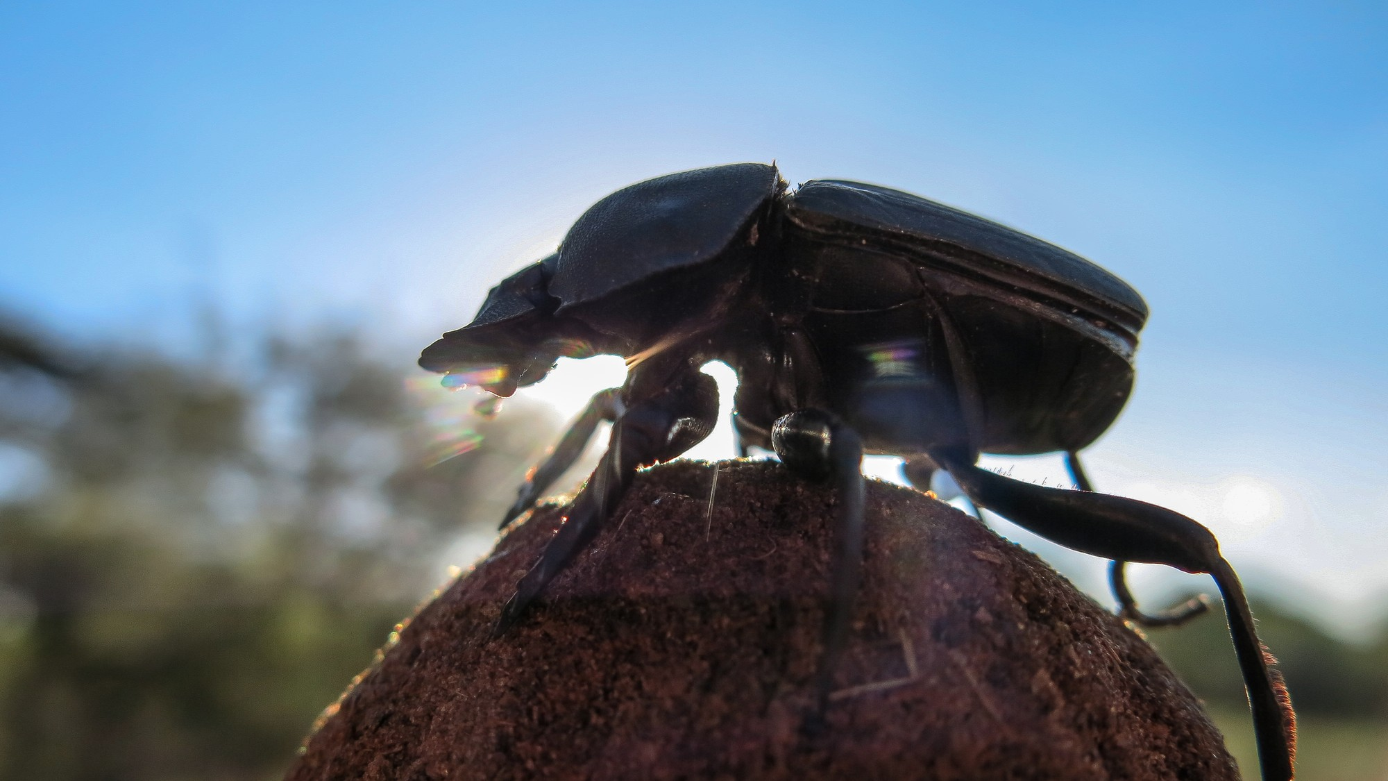 Why Dung Beetles Dance on Poop: They're Mapping the Sky - VICE