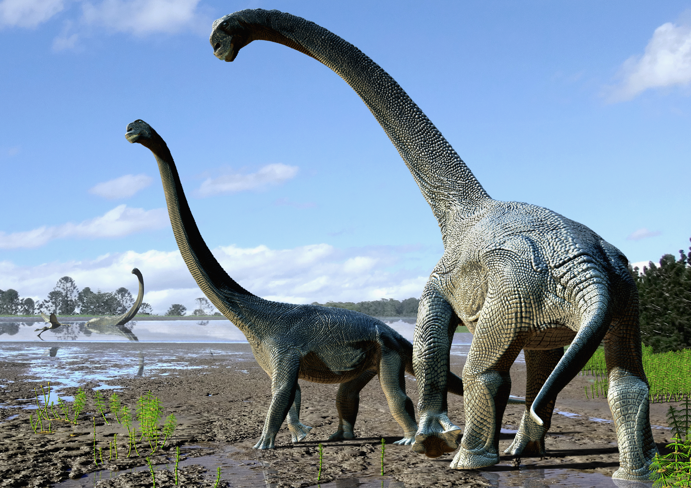 New Species of Dinosaur Identified in Australia