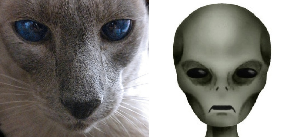 Are Cats Spies Sent by Aliens? A Deep Examination of One of the